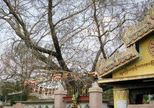 Буддизм, Сарнат